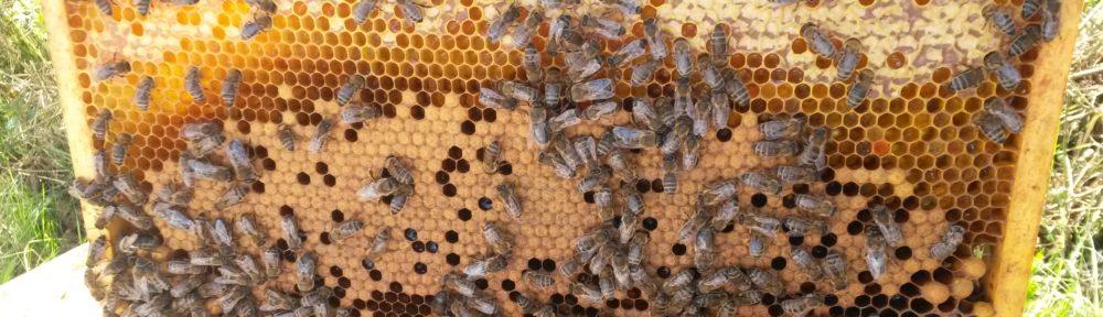 Bijenvereniging Veenendaal